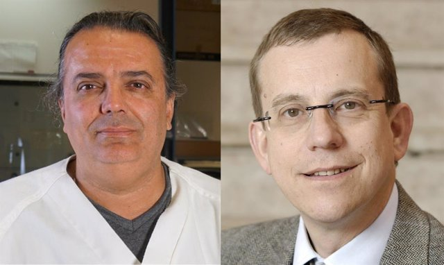 Un estudio determina los beneficios de la vitamina D en la prevención del cáncer colorrectal