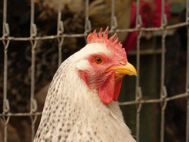 Jaulas de animales en granjas