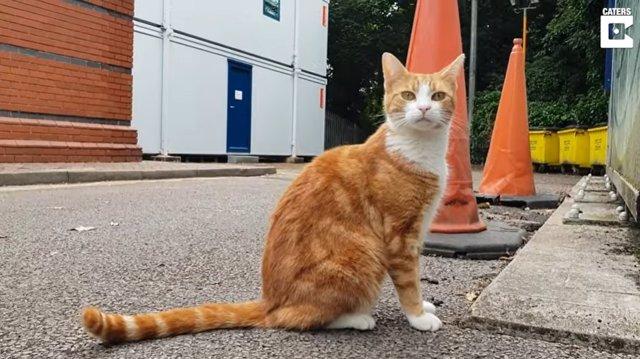 Este gato consigue trabajo como jefe de cazadores de ratones en una estación de tren de West Midlands (Inglaterra)