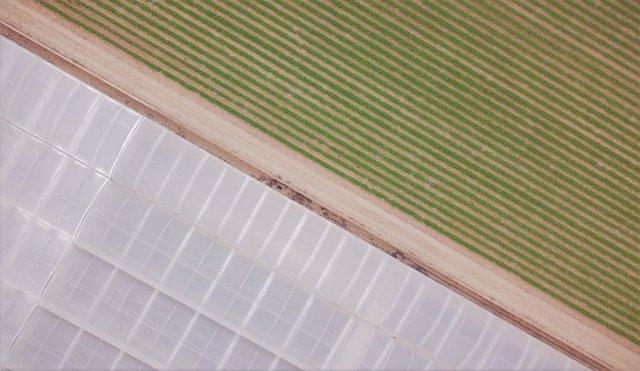 Cultivos de invernadero en el Campo de Cartagena