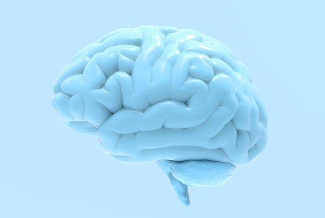 Archivo - Cerebro.