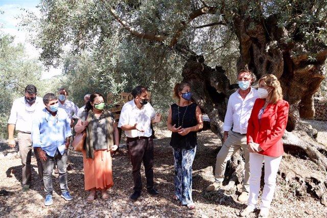 La presidenta del Govern, Francina Armengol, y la consellera de Agricultura, Pesca y Alimentación, Mae de Concha, en el acto de entrega del premio al mejor olivo monumental de España del año 2020.