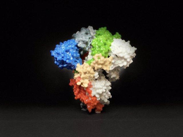 Archivo - La imagen muestra una impresión 3D de una proteína espiga en la superficie del SARS-CoV-2, el virus que causa COVID-19.
