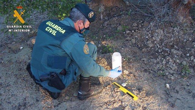 Un agente examina uno de los cebos envenenados.