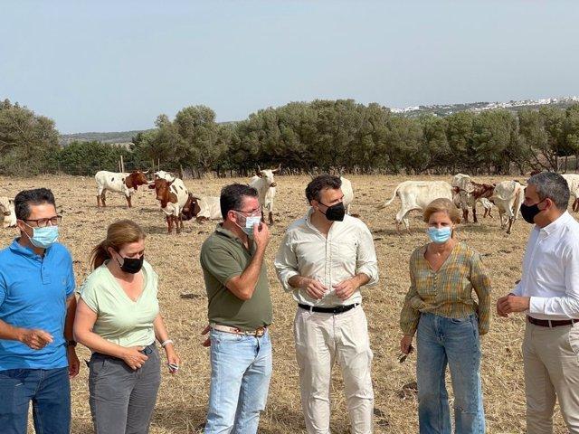 PP de Cádiz traslada su apoyo a los ganaderos de la provincia