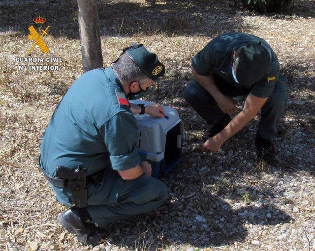 Guardia Civil investiga al autor de los disparos con una carabina de aire comprimido a un gato en Almerimar (El Ejido, Almería)