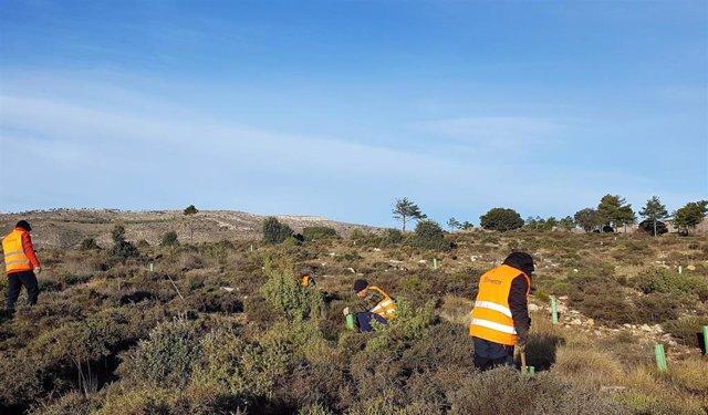 Archivo - Proyecto de reforestación en Ejulve (Teruel) en el que ha participado Mutualidad de la Abogacía