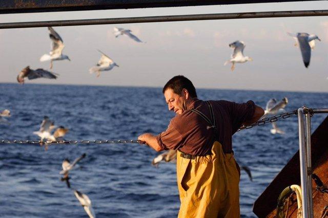 La ONG SEO/BirdLife inaugura en Ribeira (A Coruña) una muestra sobre la importancia de las aves en el mar y sus amenazas