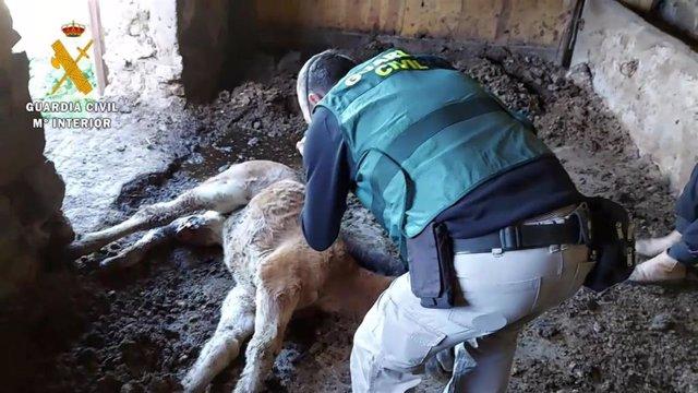 El Seprona investiga en La Rioja a una persona por la muerte por maltrato de un potro