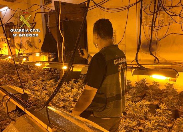 Imagen del invernadero clandestino descubierto por la Guardia Civil