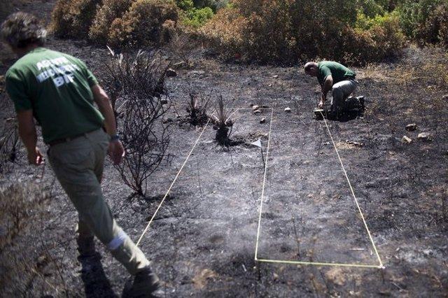 Efectivos de las brigadas de investigación de incendios forestales realizando su labor.