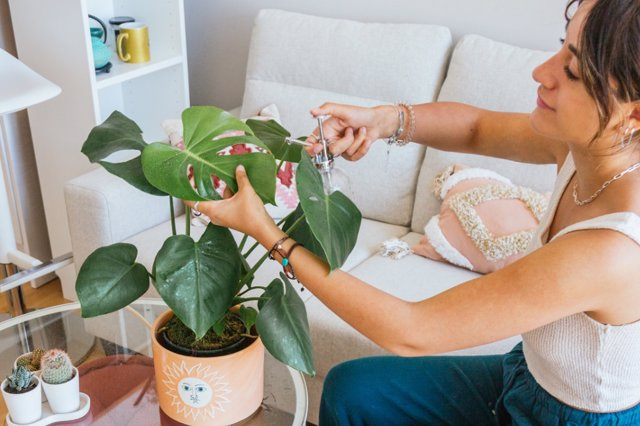 Cuida tus plantas antes de salir de vacaciones