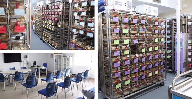 Algunas de las instalaciones del Departamento de Medicina y Cirugía Experimental del IIS-FJD