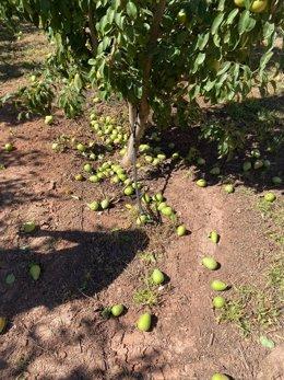 Imagen de cultivos afectados por las altas temperaturas