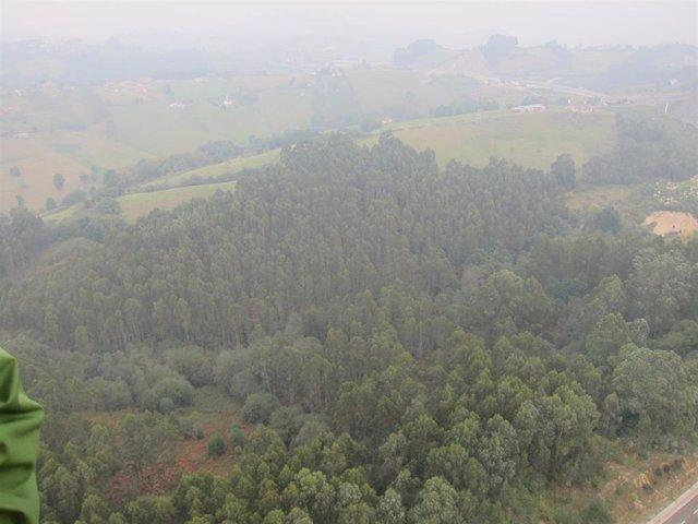 Archivo - Bosque asturiano.