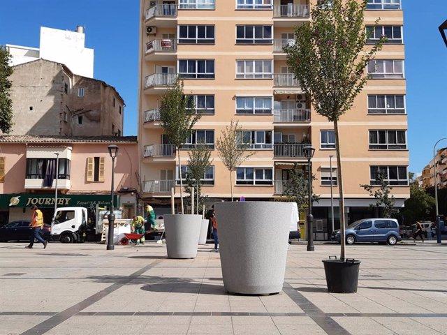 Cort instala ocho jardineras con hibiscus para mejorar el aspecto de la plaza del mercado de Pere Garau.