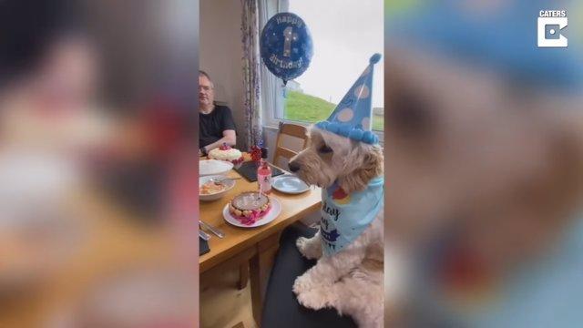 Este afortunado perro sabe que siempre hay un sitio guardado para él en la mesa junto a su familia