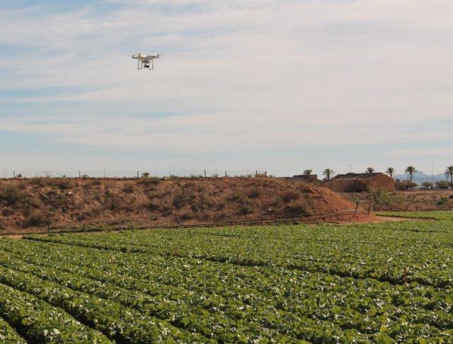 Archivo - Sector hortofrutícola murciano, campo, drone