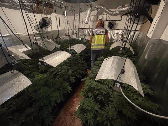 Desmantelan un laboratorio de marihuana en el interior de una vivienda de Torrent (Valencia)