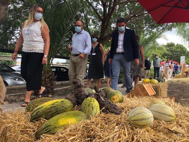El consejero Antonio Luengo, durante su visita a la exposición de las distintas variedades de melones organizada en el IMIDA