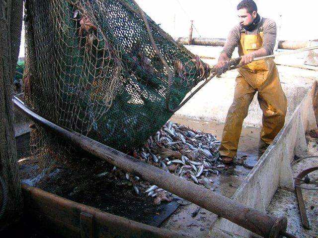 Archivo - Pesca de arrastre.