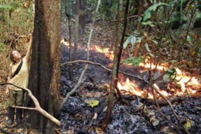La Dra. Erika Berenguer, en un bosque amazónico recien quemado durante El Niño de 2015