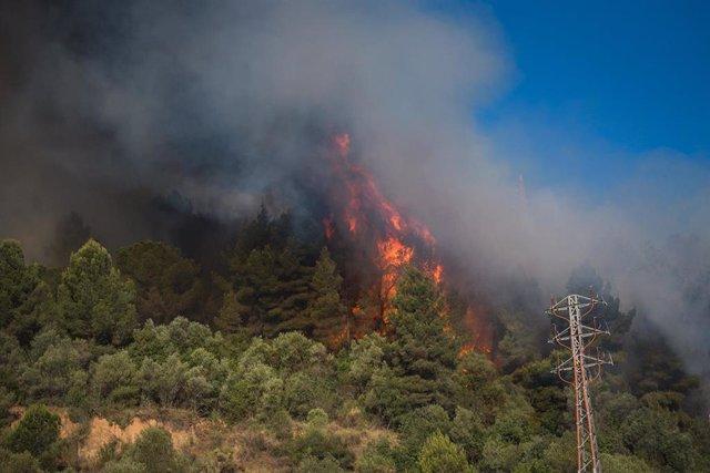 Incendio en las inmediaciones del polígono del Congost en Martorell (Barcelona), este mes de julio