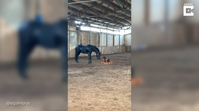 Así reacciona un caballo al encontrarse con un caballo balancín en su establo