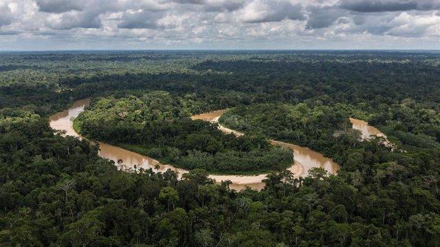 """La selva amazónica a menudo se llama """"los pulmones del mundo""""."""
