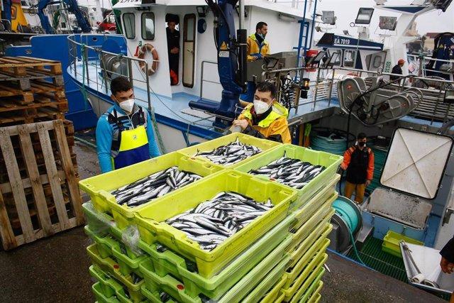 Archivo - Descarga masiva de bocarte en el puerto de Burela. Un gran cardumen en la Mariña de Lugo en la jornada del 26 de  abril, cuando de pesqueros de toda la cornisa cantabrica se juntaron en el puerto de Burela para descargar