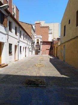 Junts reprocha a Colau la tala de cuatro árboles en la calle Cerdà de Sant Andreu