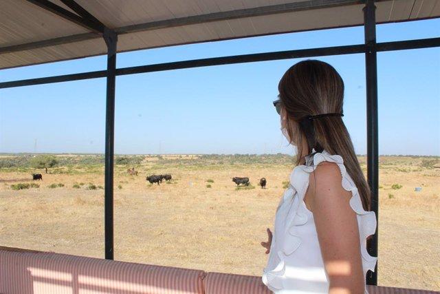 La delegada de la Junta en Huelva, Bella Verano, visita una finca de toro bravo.