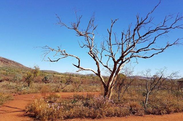 Paisaje árido en Australia