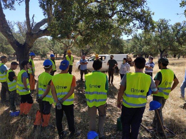 Este año la Escuela de Descorche ha desarrollado sus prácticas en un aprovechamiento de más de 144 mil kilos de corcho en 285 hectáreas.