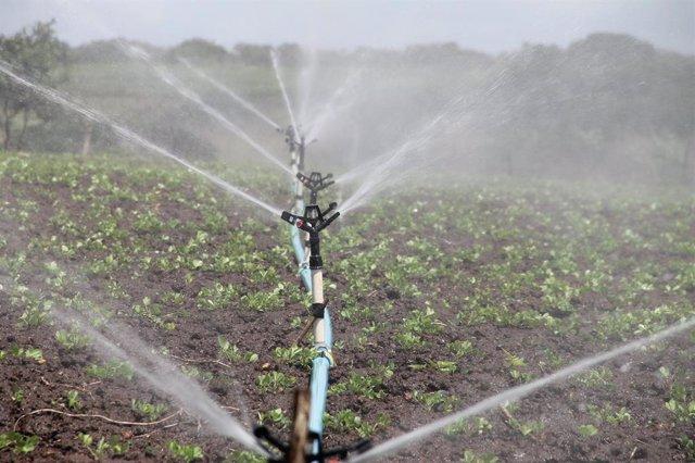Ayudas de hasta 100.000 euros para actuaciones de eficiencia energética en explotaciones agropecuarias.