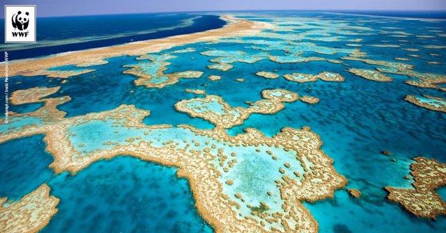 Archivo - Imagen de archivo de la Gran Barrera de Coral.