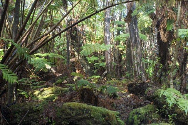 Archivo - Selva tropical húmeda en Hawai
