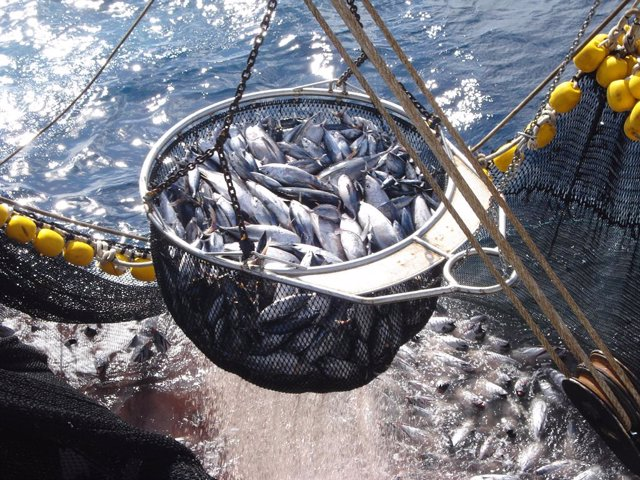 Atún de pesca responsable