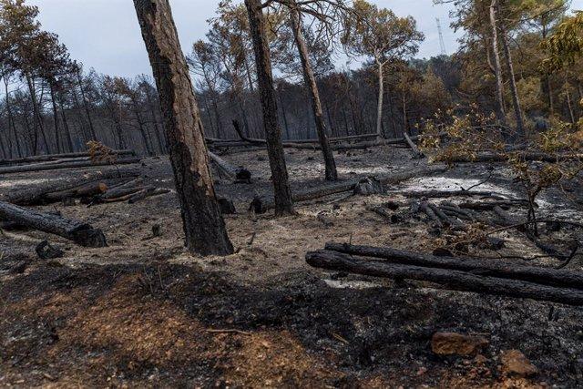 Estat dels voltants de Santa Coloma de Queralt després de l'incendi