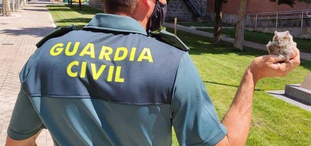 Cría de autillo rescatada por la Guardia Civil en Pamplona