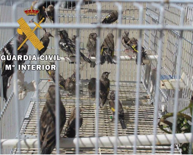 Pájaros recuperados
