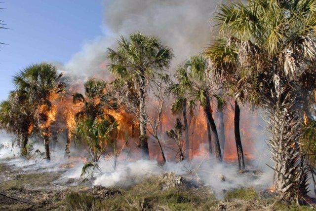 Las emisiones de carbono aumentan con incendios en bosques tropicales