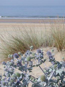 Archivo - Playa de Huelva./Archivo