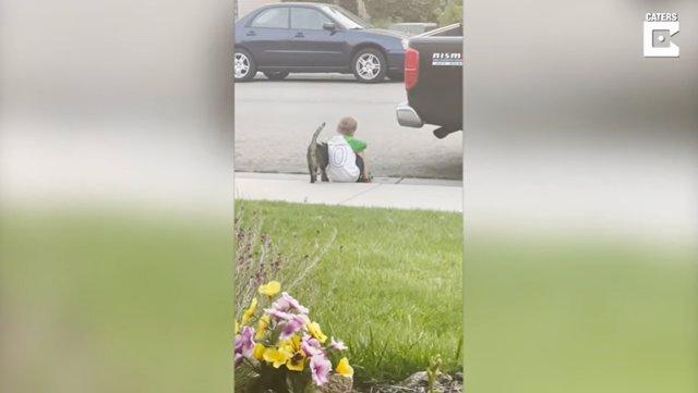 El gato de los vecinos se acerca a consolar y hacer compañía a un niño que estaba sentado solo en una acera