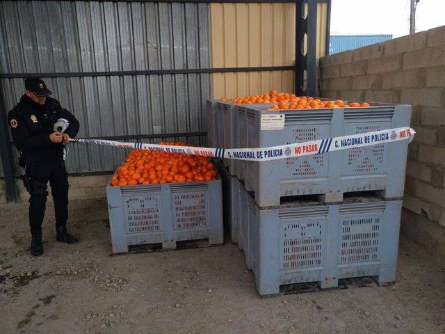 Archivo - Sucesos.- La Policía de la Generalitat desmantela 10 almacenes ilegales con toneladas de naranjas, almendras y algarroba