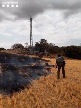 Investigan si un pájaro electrocutado originó el incendio de Cubells (Lleida)