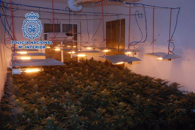 Los detenidos habían adaptado varias estancias de modo que las mismas fueran invernaderos para el cultivo ilegal.