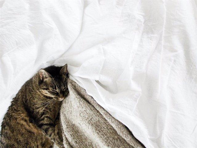Los gatos suelen dejar todo lleno de pelos a su paso, pero tenemos la solución para olvidarte de este molesto inconveniente y disfrutar al máximo de tu mascota