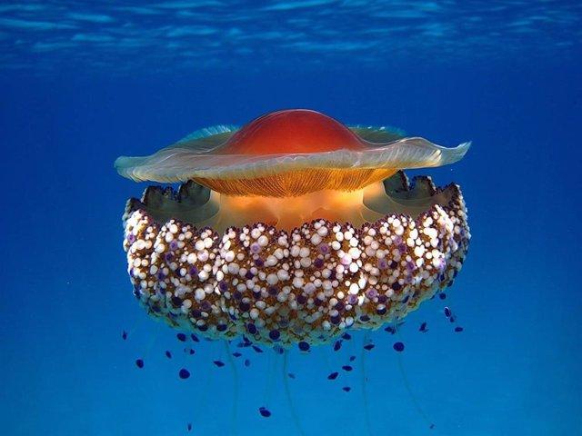 El estudio ha sido llevado a cabo por un equipo del Instituto de Ciencias Marinas de Andalucía (Icman-CSIC).
