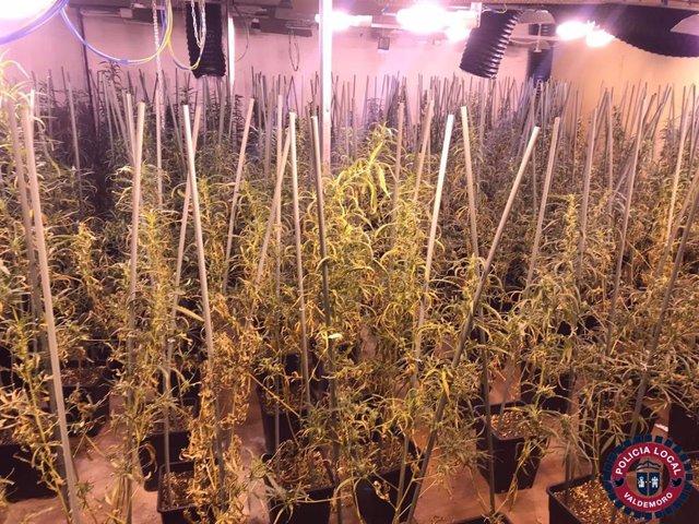 Plantación de marihuana en Valdemoro